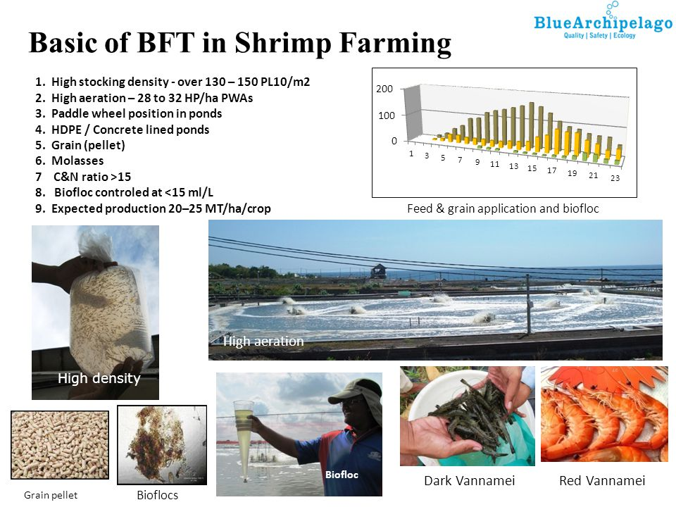 Basic of BFT in Shrimp Farming