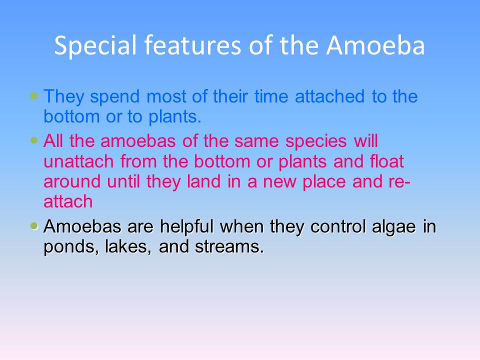 Special features of the Amoeba