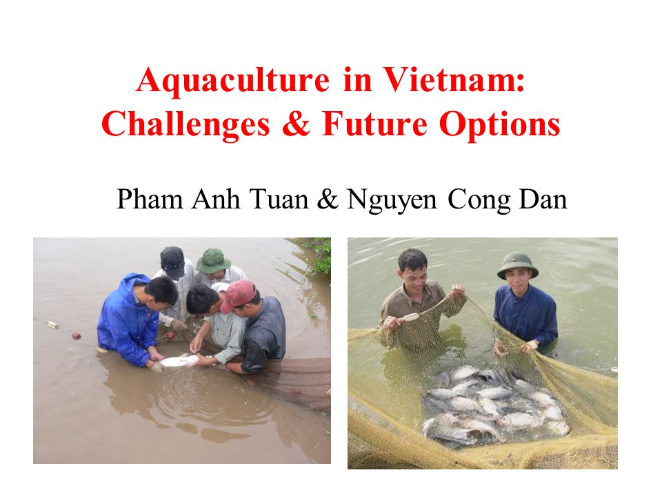 Aquaculture in Vietnam: Challenges & Future Options