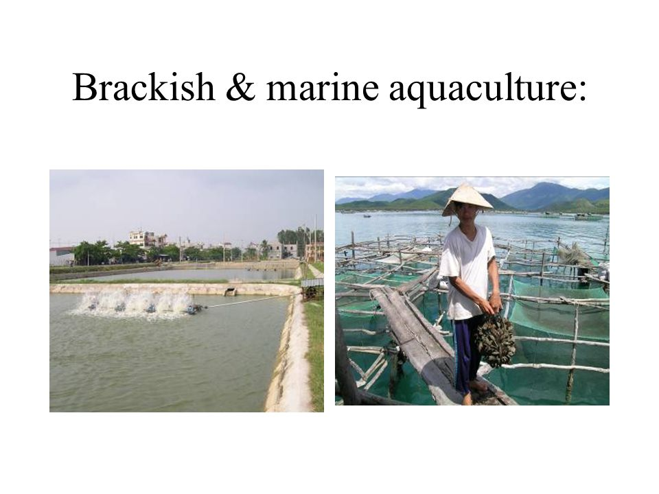 Brackish & marine aquaculture: