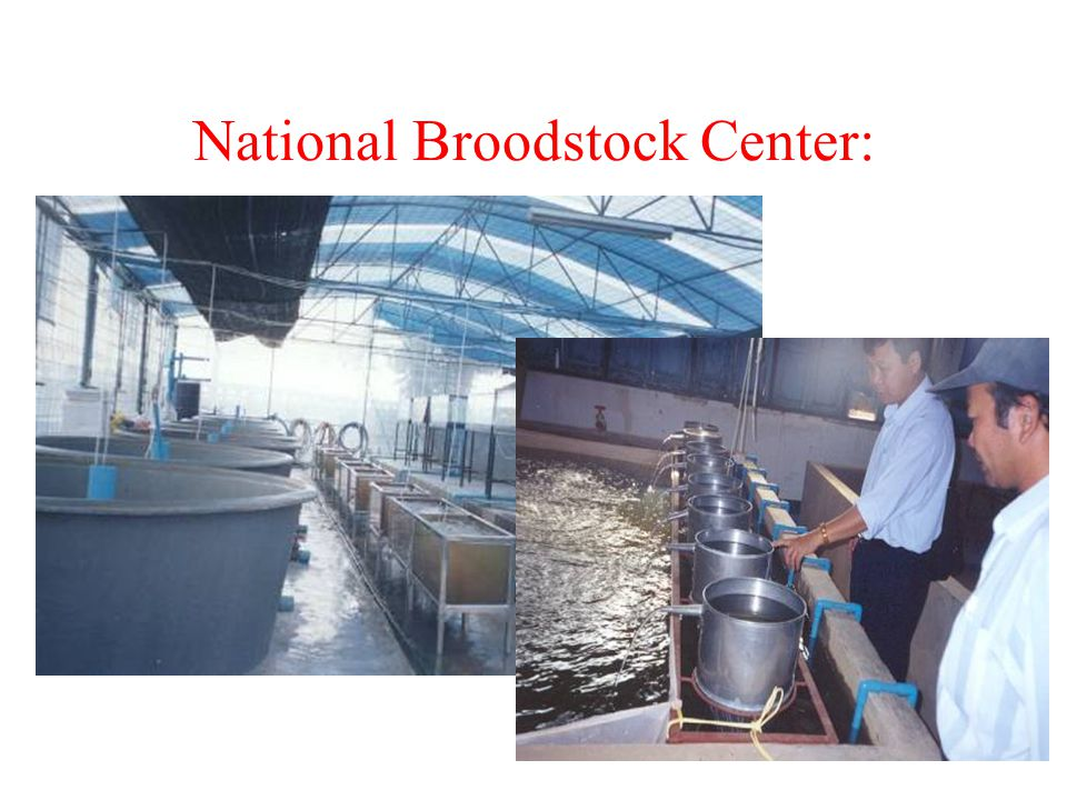 National Broodstock Center: