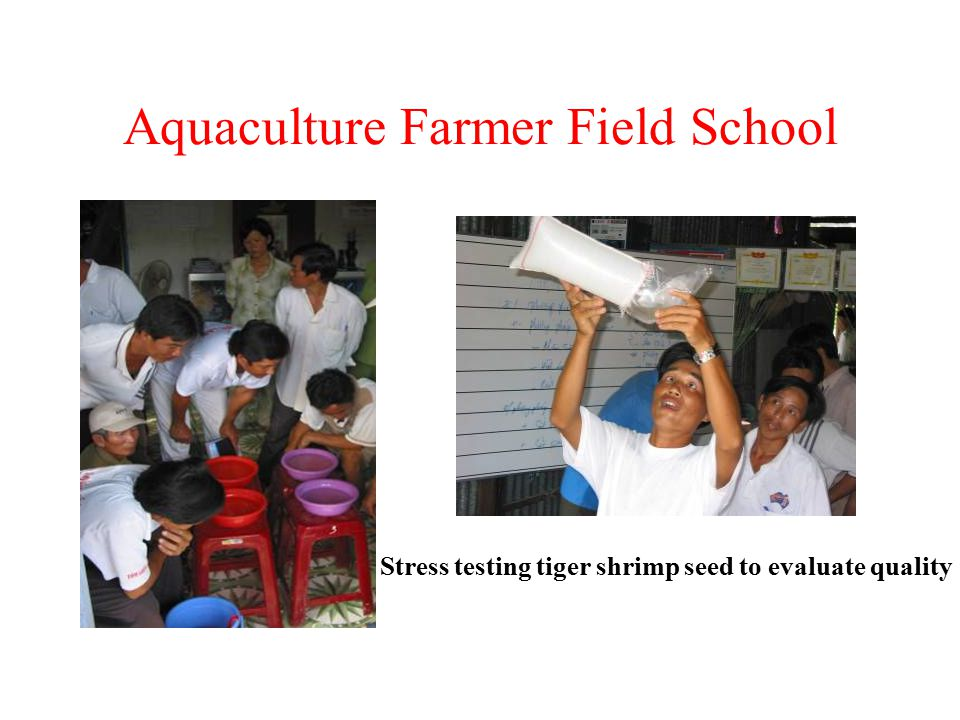 Aquaculture Farmer Field School