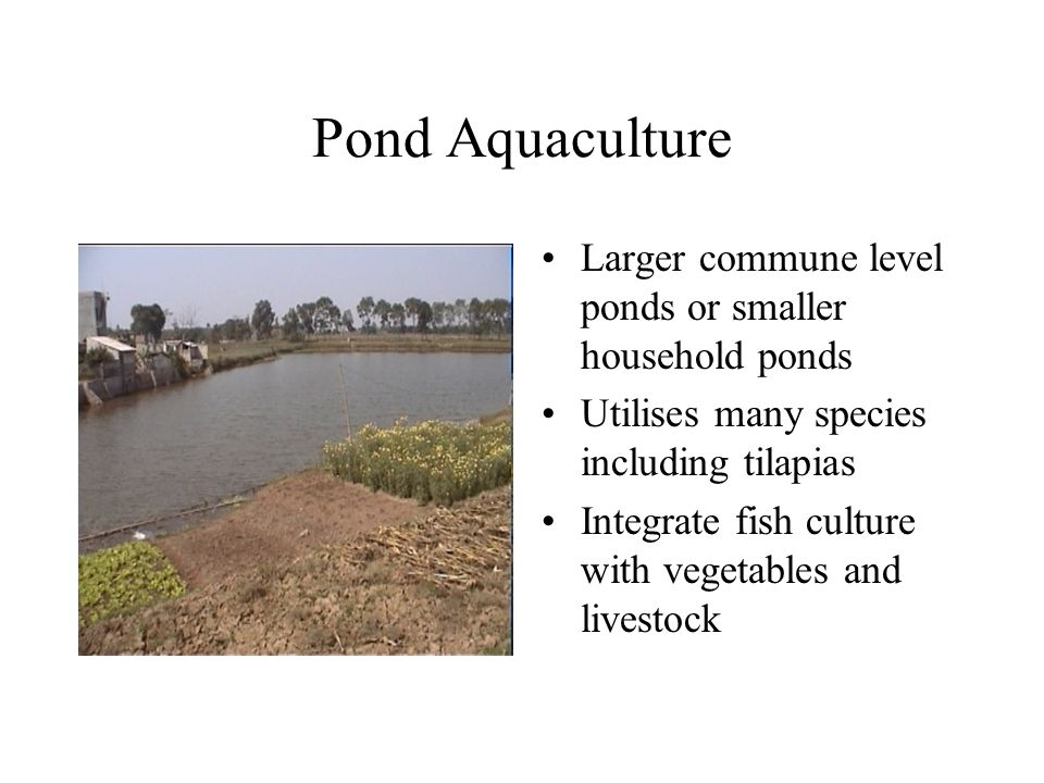 Pond Aquaculture Larger commune level ponds or smaller household ponds