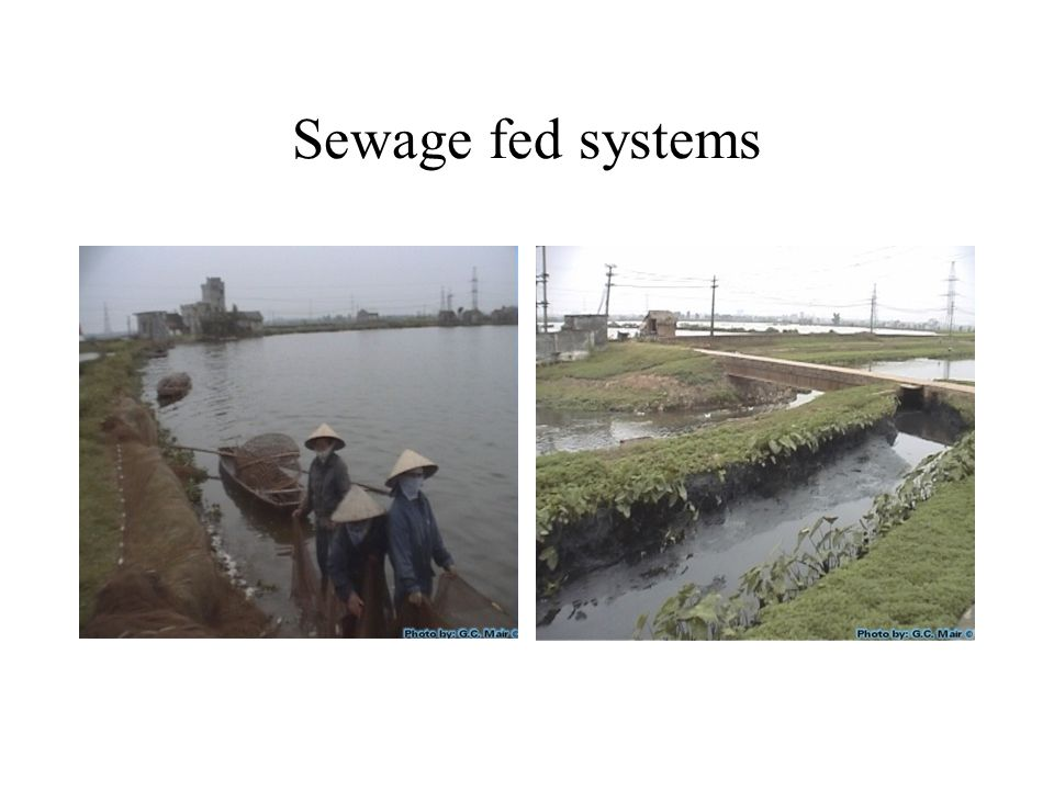 Sewage fed systems