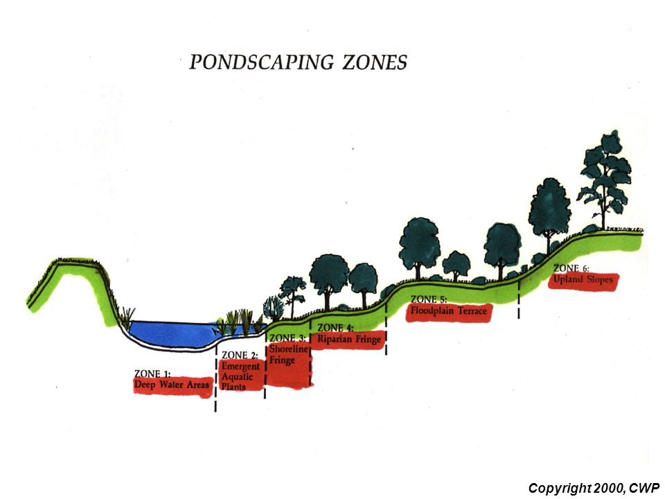 This slide schematically illustrates possible pondscaping zones to include in a design. Each zone has a separate functional goal. In addition, different types of vegetation are best suited to survive in each zone. While zone 6 favors upland species such as oaks, zone 2 would incorporate plants such as pickerel. Local soil and water conservation districts or extension agencies may be the best source of local plant information..