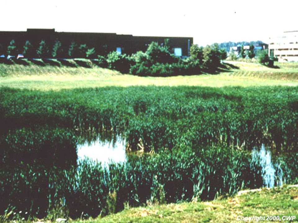 Dense wetland vegetation provides refuge for birds and other wildlife.