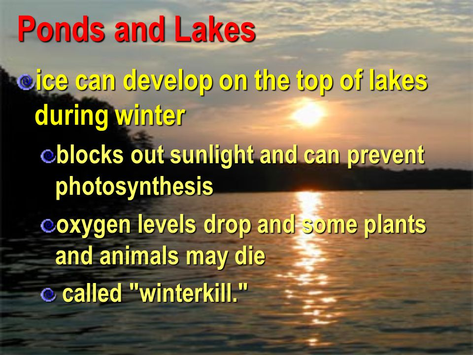 Ponds and Lakes ice can develop on the top of lakes during winter
