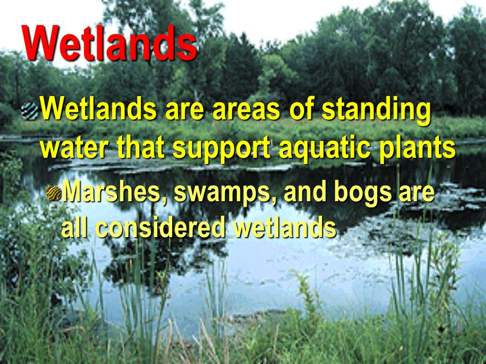 Wetlands Wetlands are areas of standing water that support aquatic plants.