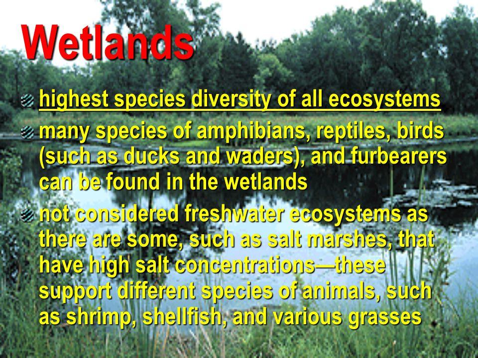 Wetlands highest species diversity of all ecosystems