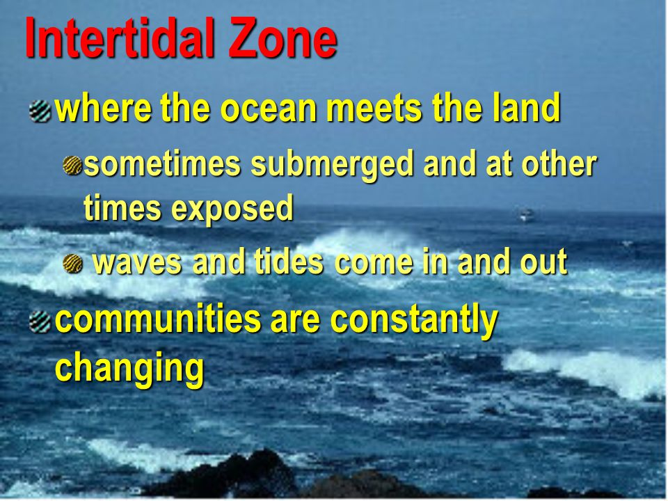 Intertidal Zone where the ocean meets the land