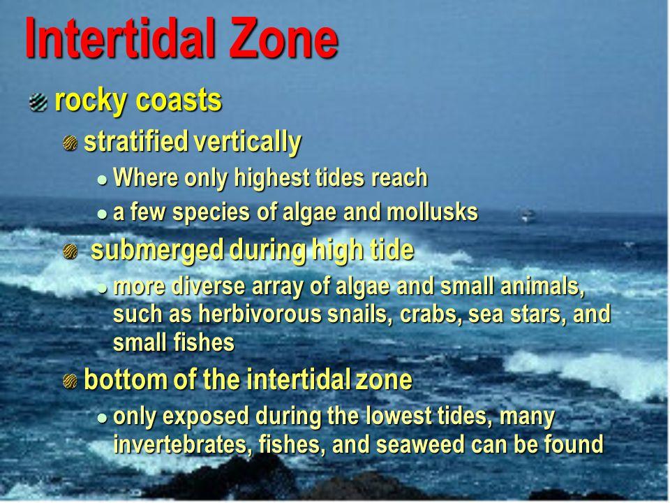 Intertidal Zone rocky coasts stratified vertically