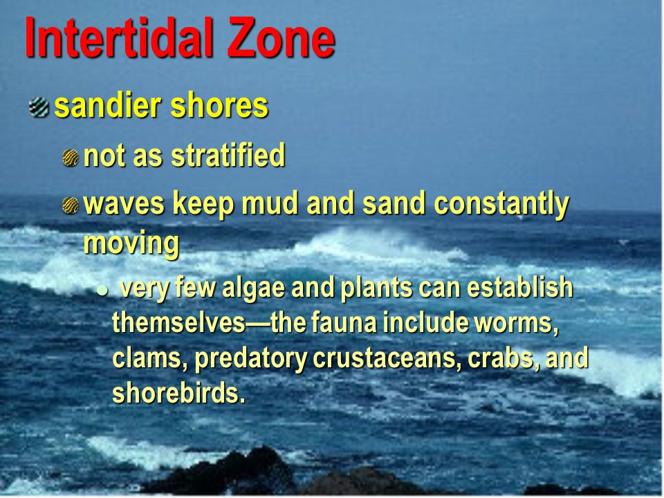 Intertidal Zone sandier shores not as stratified