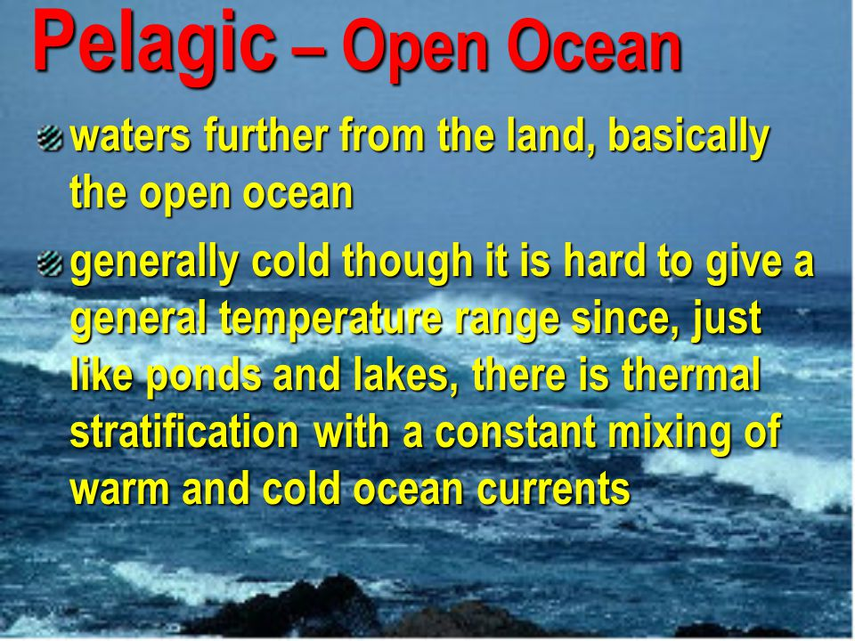 Pelagic – Open Ocean waters further from the land, basically the open ocean.