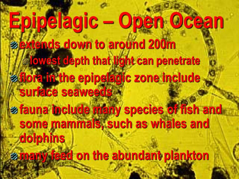 Epipelagic – Open Ocean