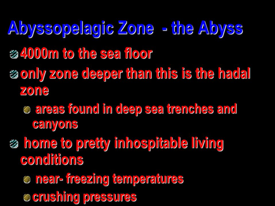 Abyssopelagic Zone - the Abyss