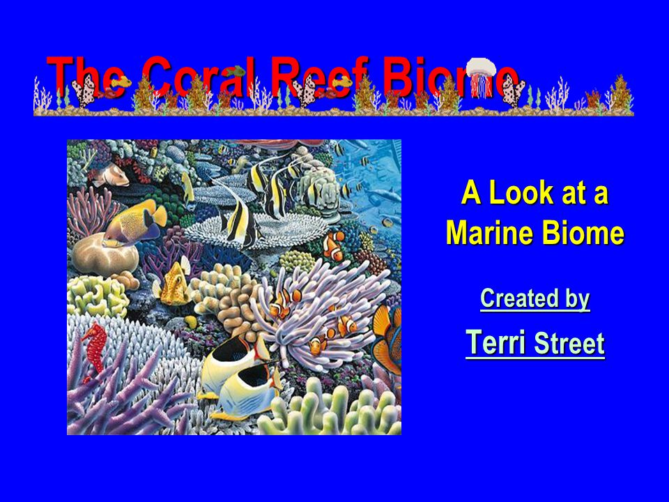 A Look at a Marine Biome Created by Terri Street