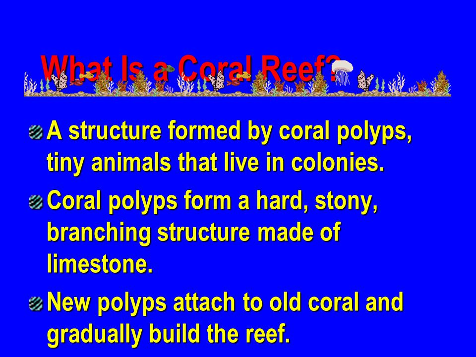 What Is a Coral Reef A structure formed by coral polyps, tiny animals that live in colonies.
