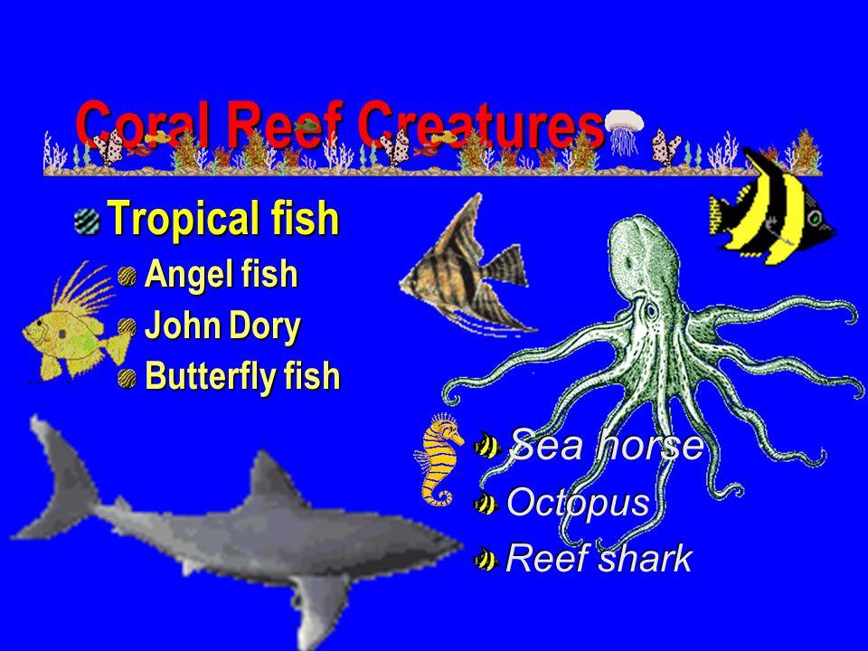 Coral Reef Creatures Tropical fish Sea horse Angel fish John Dory
