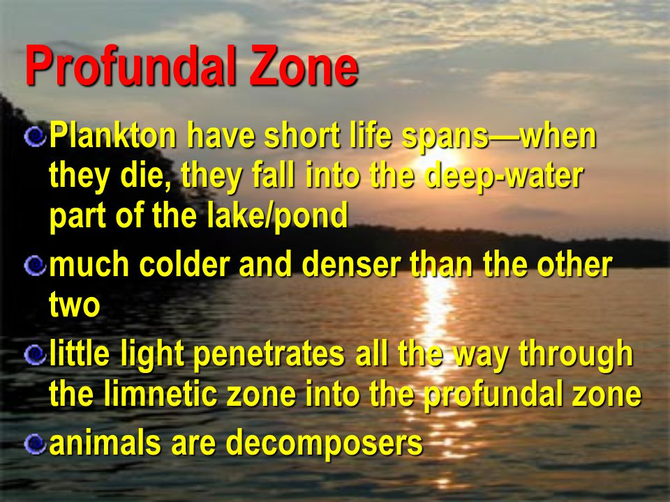 Profundal Zone Plankton have short life spans—when they die, they fall into the deep-water part of the lake/pond.