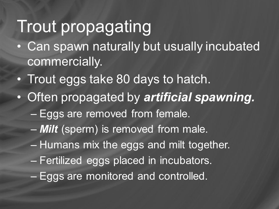 Trout propagating Can spawn naturally but usually incubated commercially. Trout eggs take 80 days to hatch.