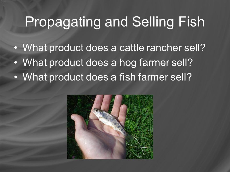Propagating and Selling Fish