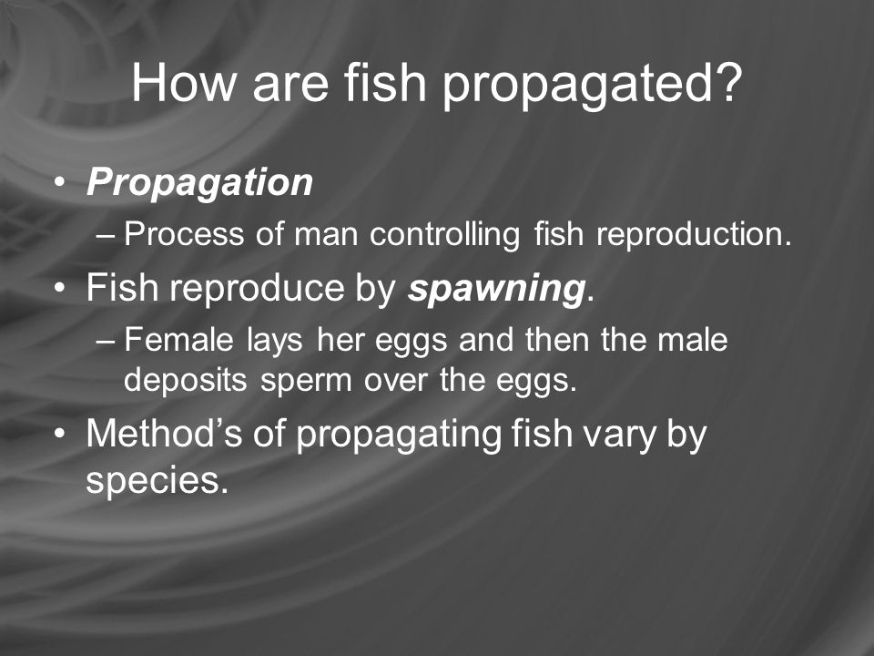 How are fish propagated