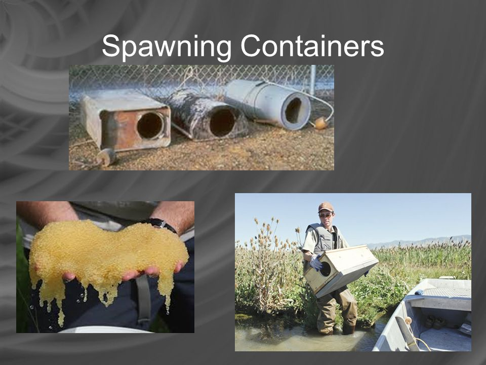 Spawning Containers