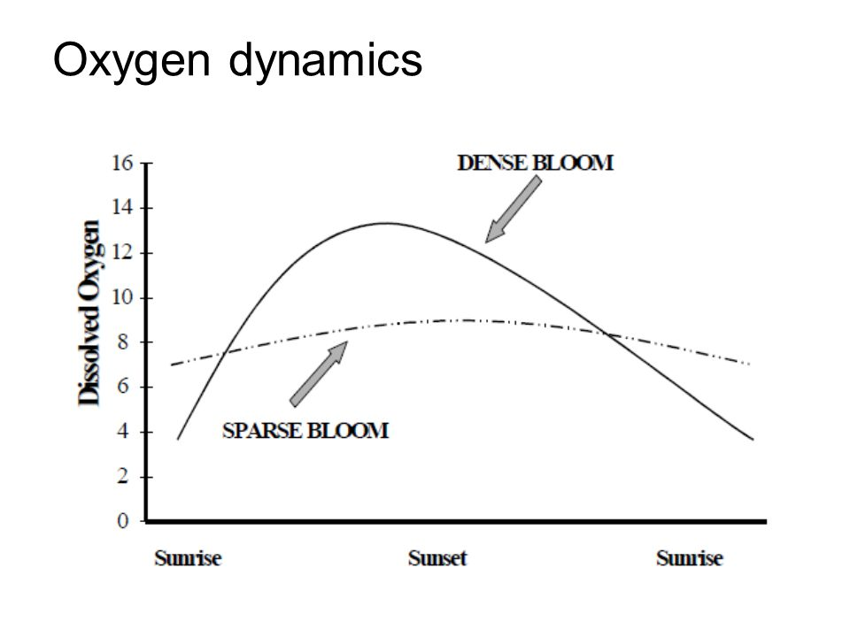 Oxygen dynamics This graph shows the impact of algae blooms on dissolved oxygen readings of a pond.