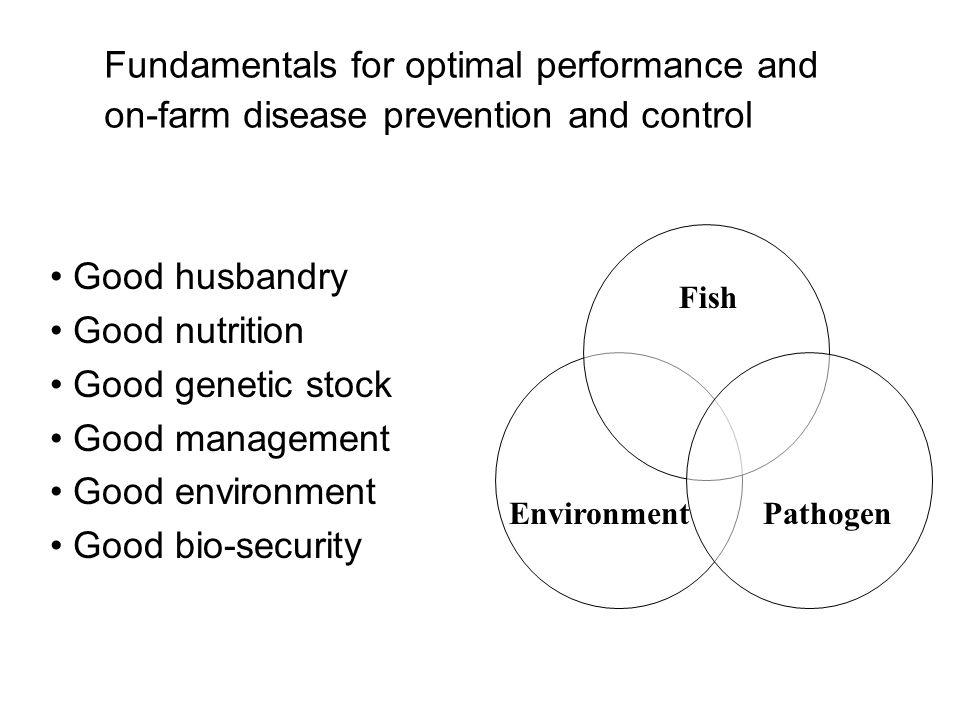 Fundamentals for optimal performance and on-farm disease prevention and control