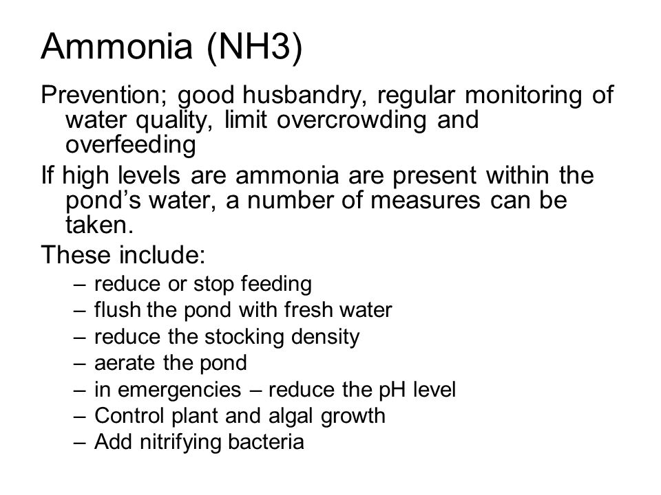 Ammonia (NH3) Prevention; good husbandry, regular monitoring of water quality, limit overcrowding and overfeeding.
