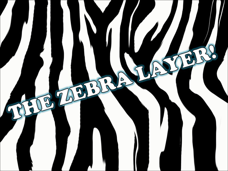 THE ZEBRA LAYER!