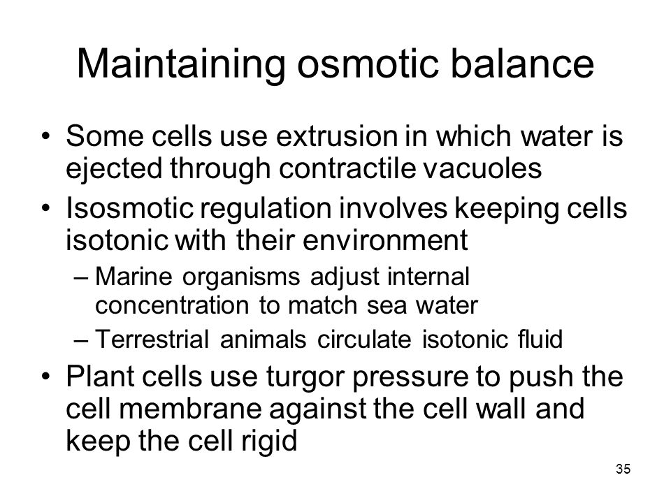 Maintaining osmotic balance