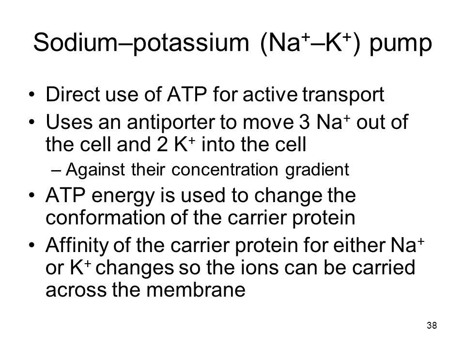 Sodium–potassium (Na+–K+) pump