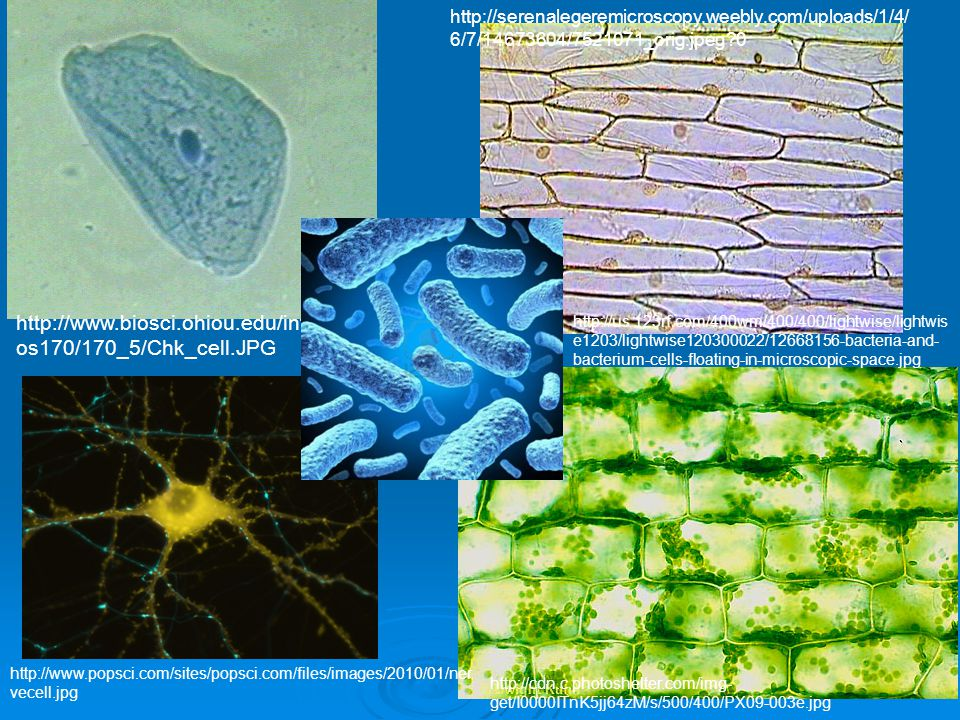 http://serenalegeremicroscopy. weebly