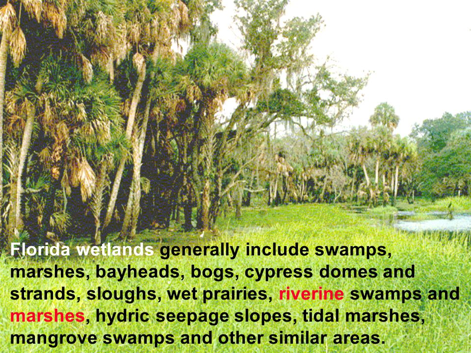 Florida wetlands generally include swamps, marshes, bayheads, bogs, cypress domes and strands, sloughs, wet prairies, riverine swamps and marshes, hydric seepage slopes, tidal marshes, mangrove swamps and other similar areas.