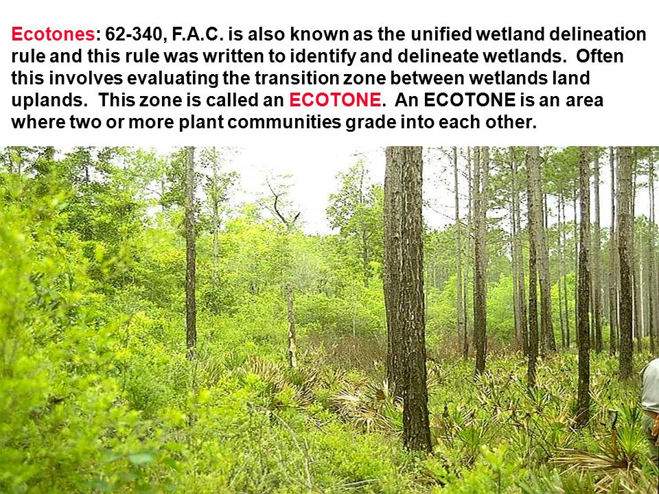 Ecotones: 62-340, F.A.C. is also known as the unified wetland delineation