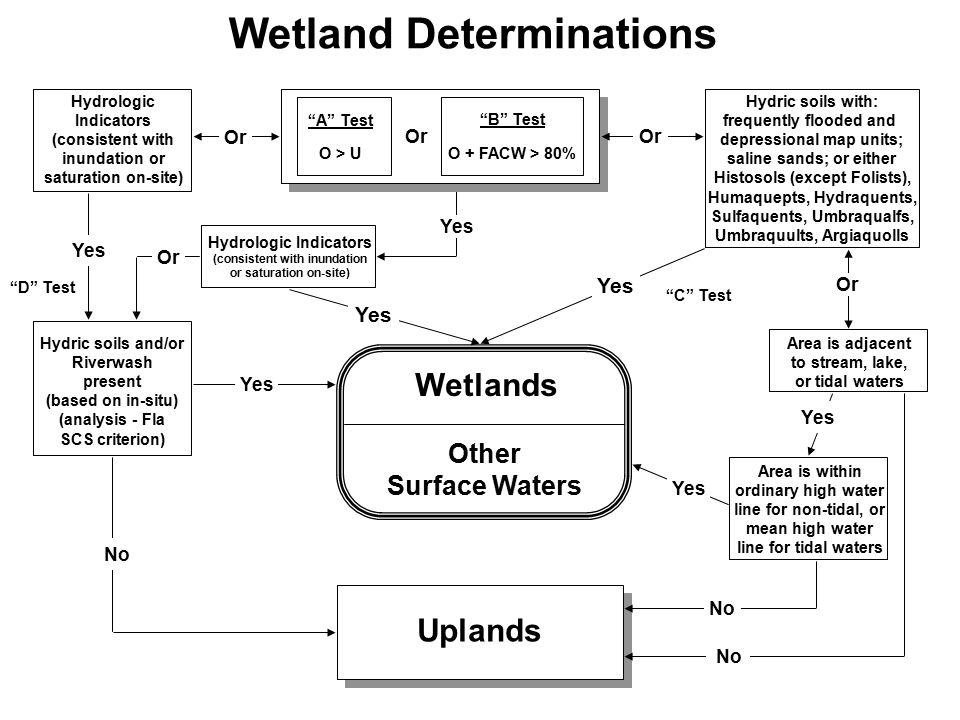 Wetland Determinations