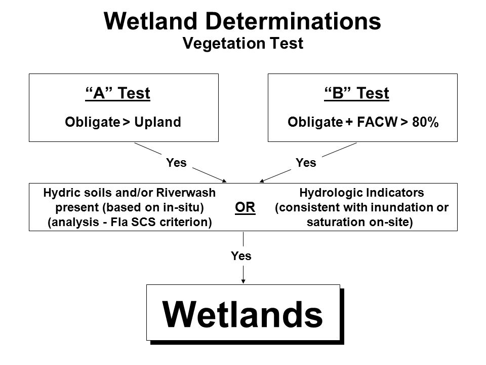 Wetland Determinations Vegetation Test