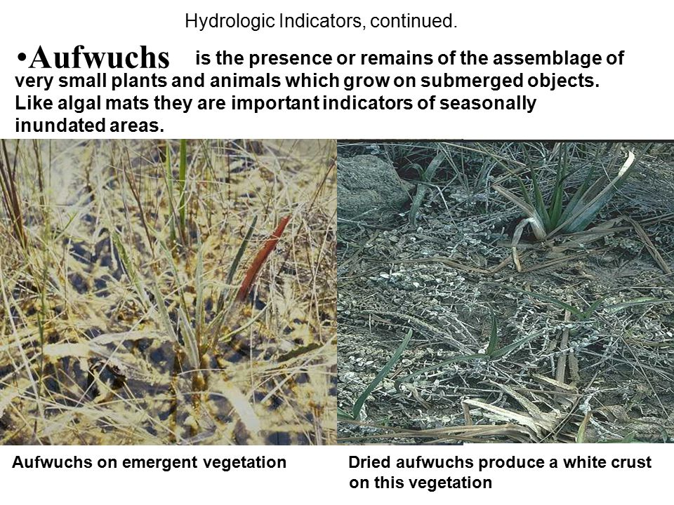Aufwuchs Hydrologic Indicators, continued.