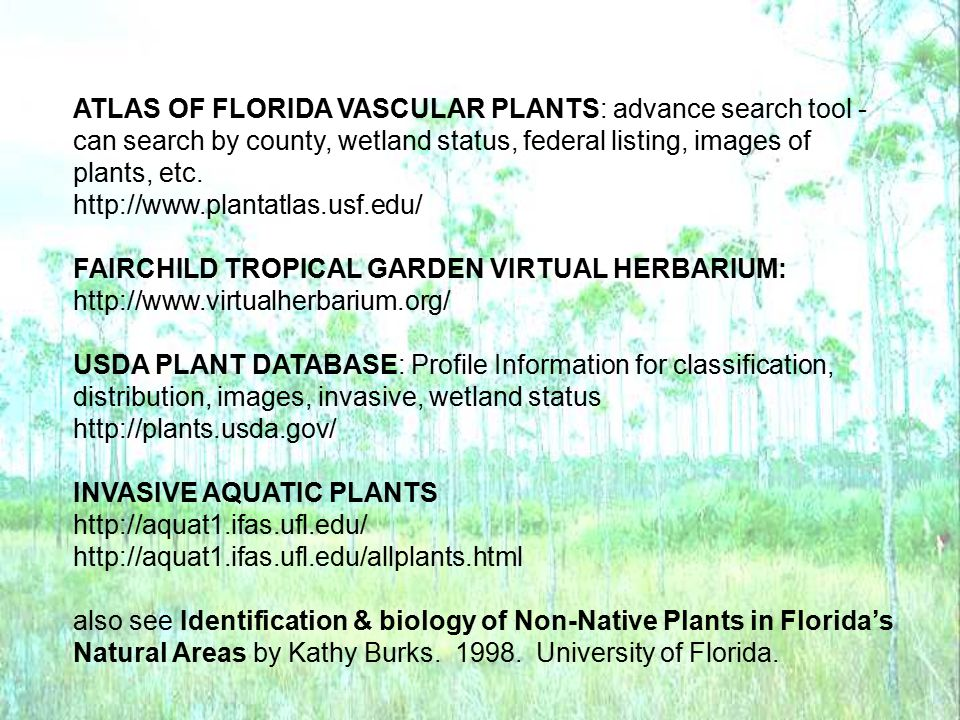 ATLAS OF FLORIDA VASCULAR PLANTS: advance search tool -
