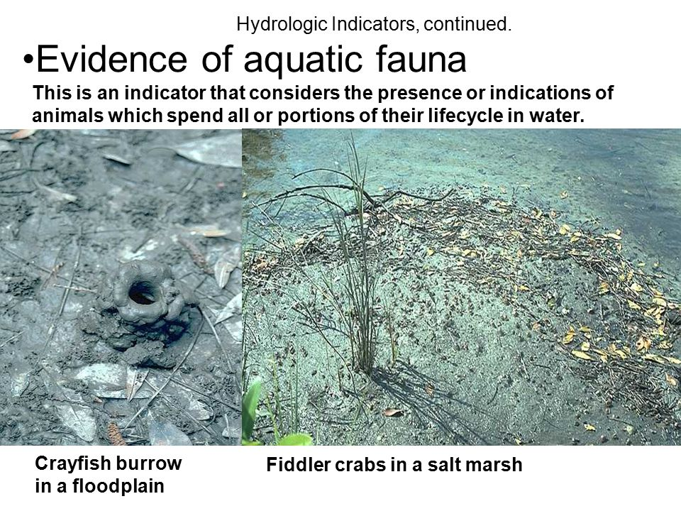 Evidence of aquatic fauna
