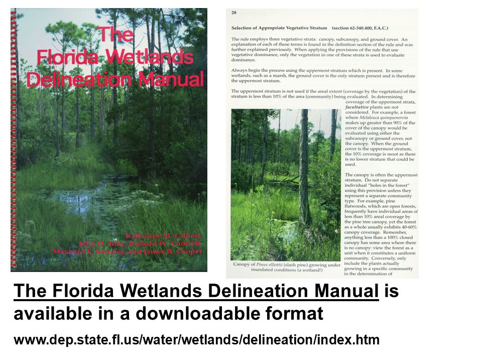 The Florida Wetlands Delineation Manual is