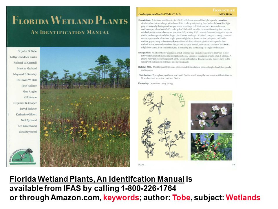 Florida Wetland Plants, An Identifcation Manual is