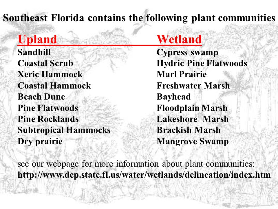 Southeast Florida contains the following plant communities