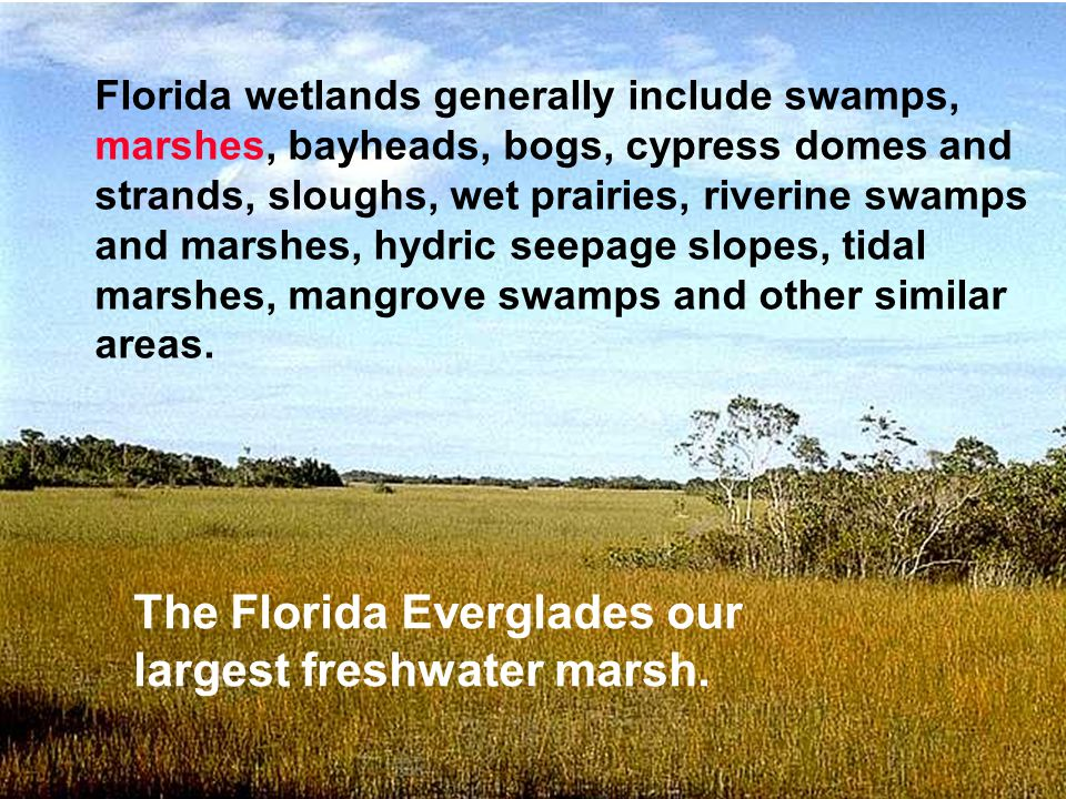 The Florida Everglades our largest freshwater marsh.