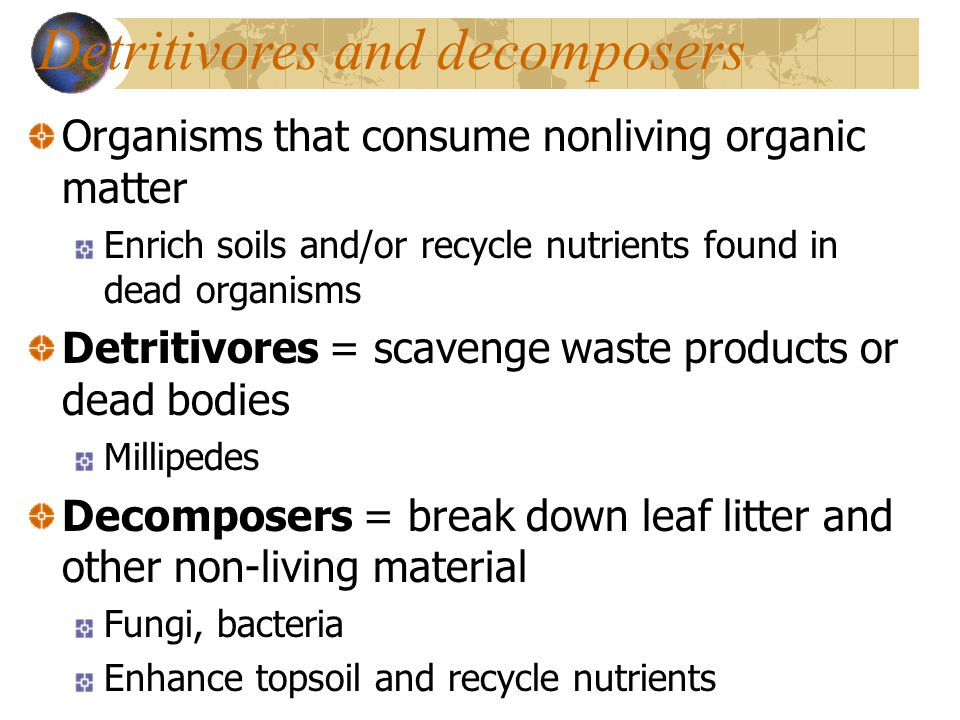 Ecosystems components energy flow and matter cycling for Living things found in soil