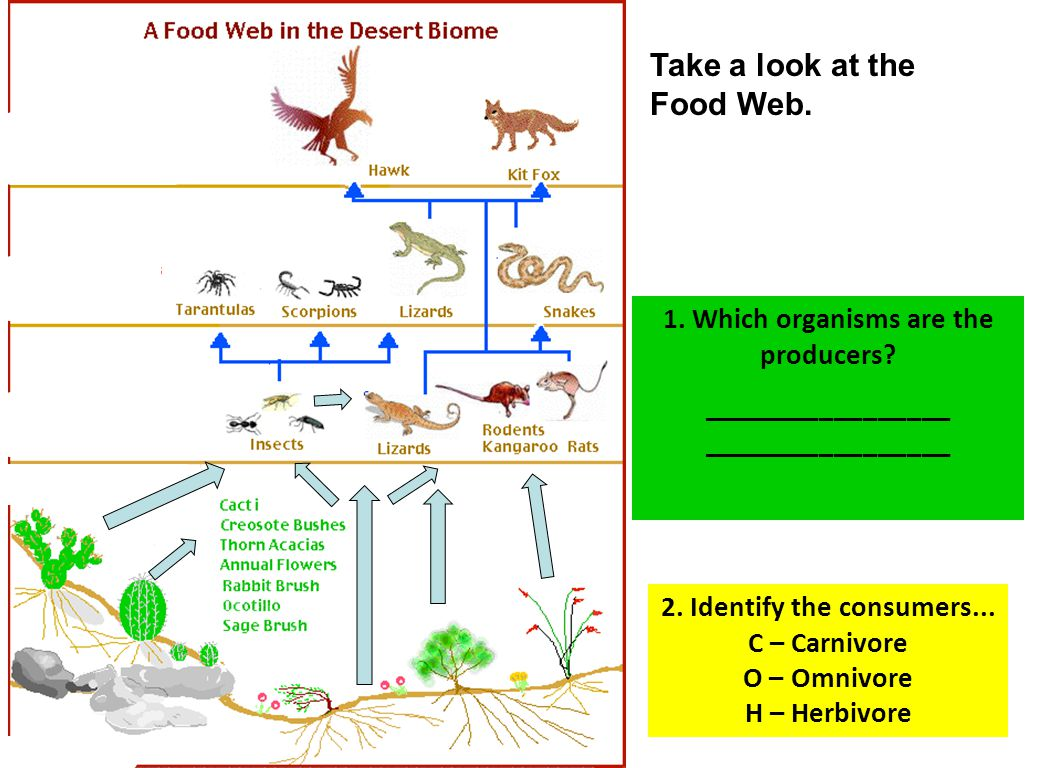Take a look at the Food Web. 1. Which organisms are the producers