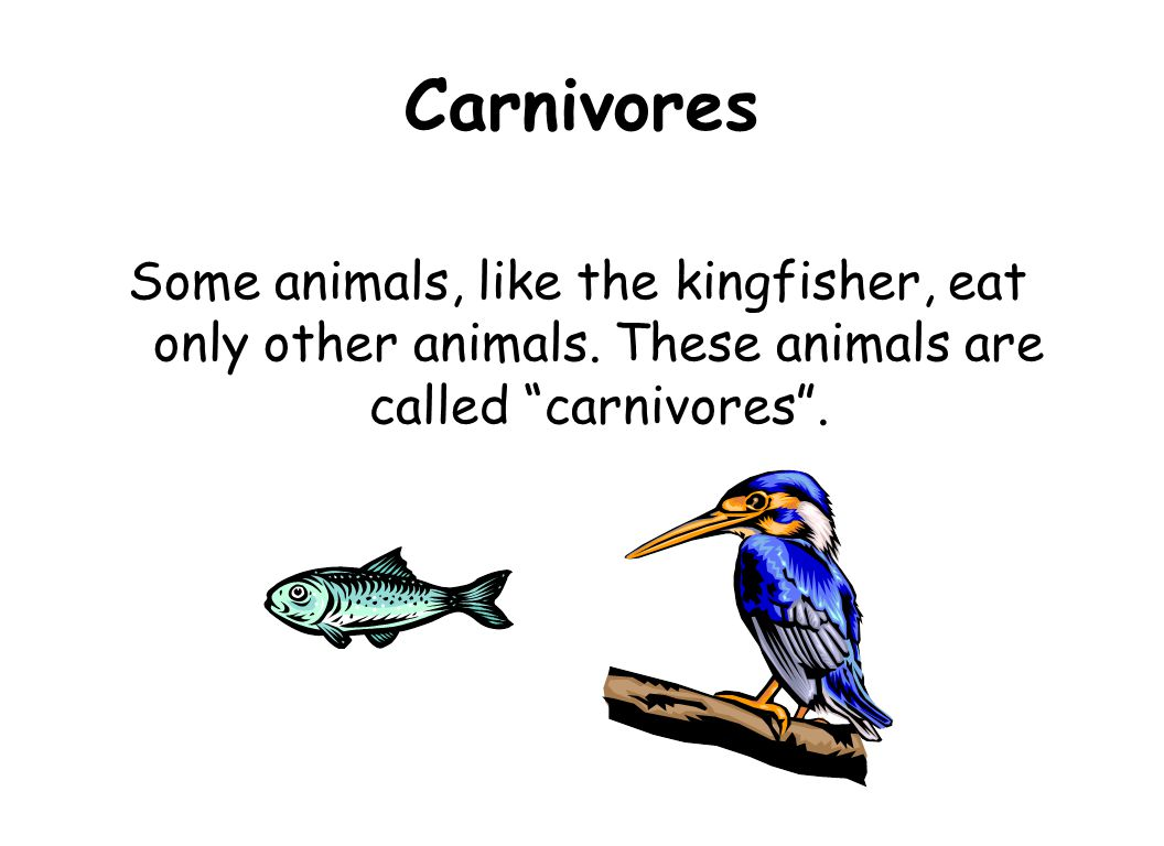 Carnivores Some animals, like the kingfisher, eat only other animals.