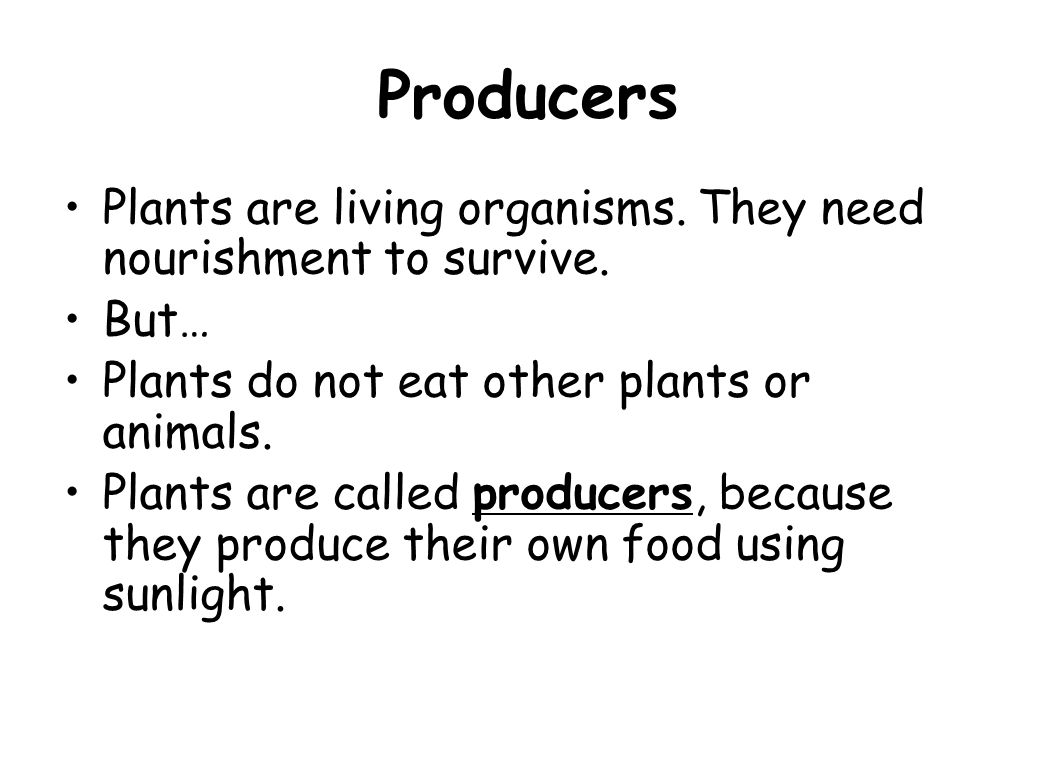 Producers Plants are living organisms. They need nourishment to survive. But… Plants do not eat other plants or animals.