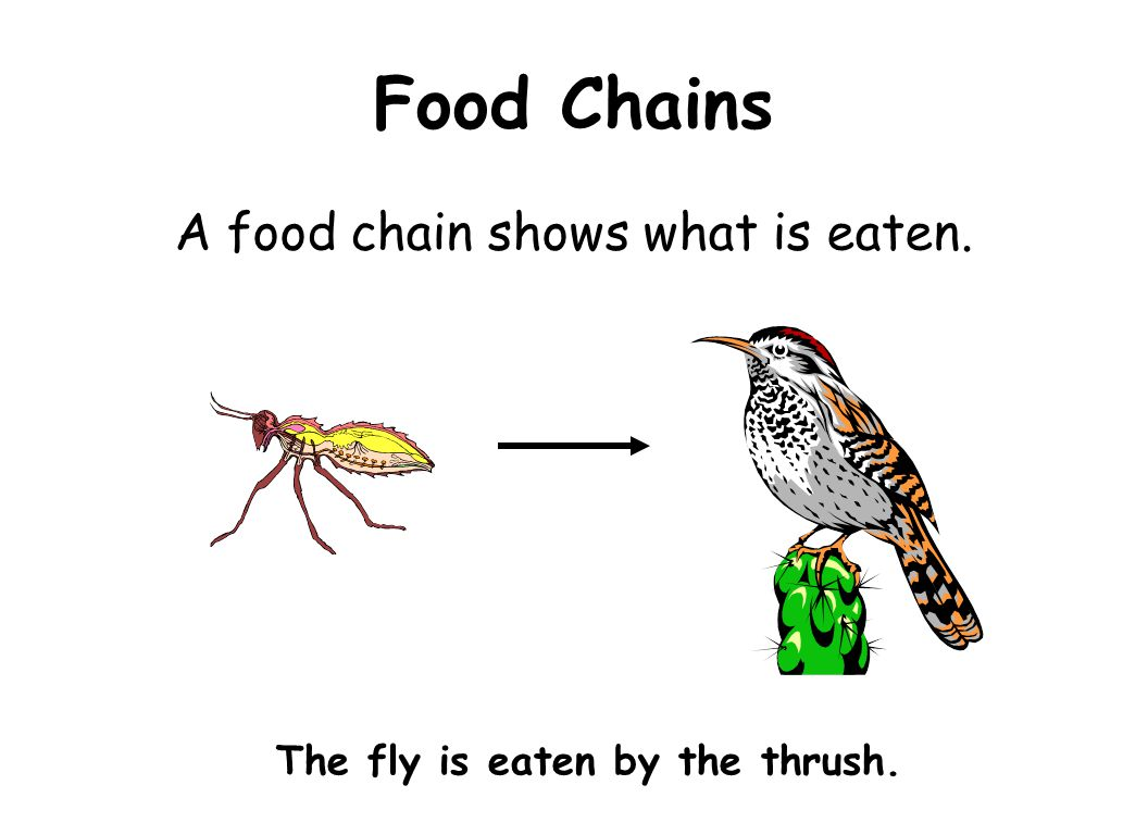 The fly is eaten by the thrush.